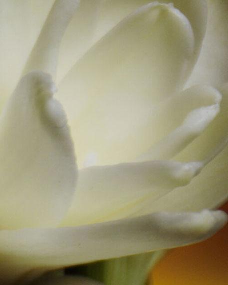 Art of Materials Joyeuse Tubéreuse Eau de Parfum, 2.5 oz./ 75 mL