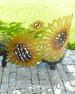 Sunflower Bench