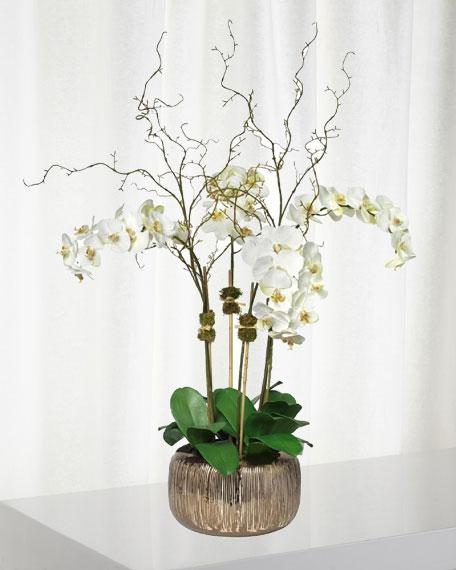 Orchid Arrangement in Empire Bowl