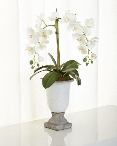 Orchids in Ceramic Urn
