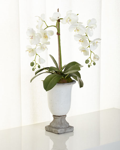 NDI Orchids in Ceramic Urn