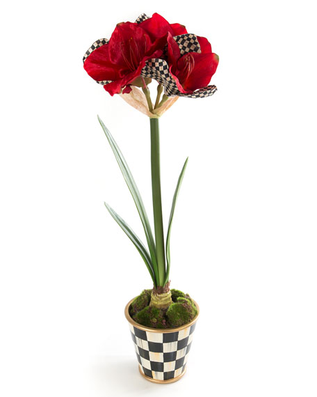 Courtly Check Amaryllis in Pot