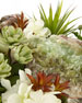 Succulents and Green Calcite in Old World Urn