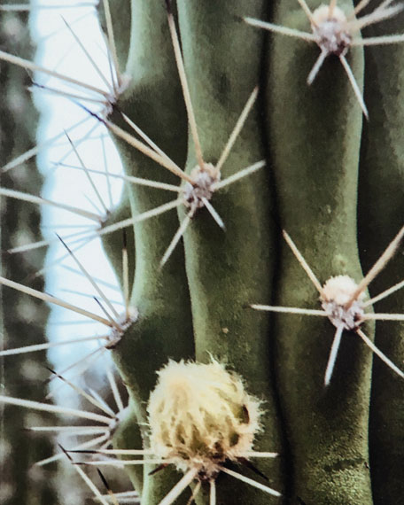"""Cactus Garden"" Photography Print on Maple Box Framed Wall Art"