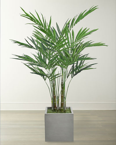 King Palm Arrangement in Cube