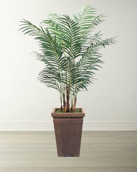 NDI Areca Palm Arrangement in Square Planter