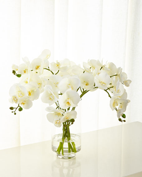 NDI Cream Orchid Phalaenopsis in Glass Cylinder