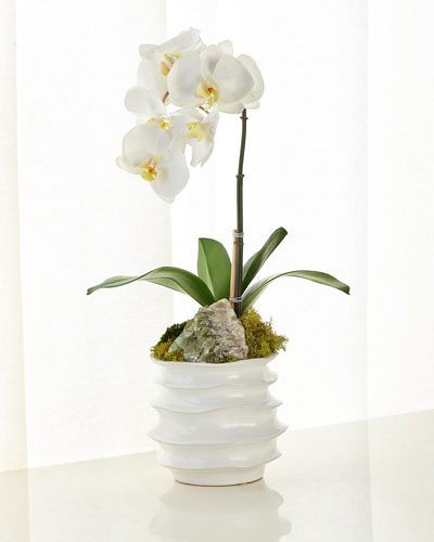 White Orchid in Contemporary Pot