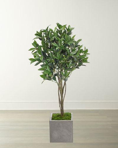 Laurel Topiary in Concrete Cube  50