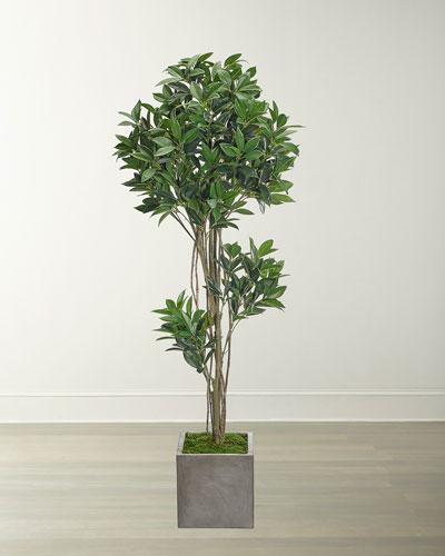 Laurel Topiary in Concrete Cube  60