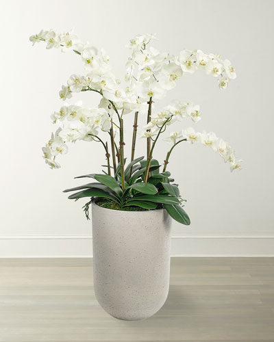 Phalaenopsis Orchids in Planter