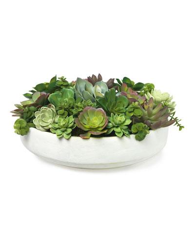 Mixed Echeveria in White Clay Bowl