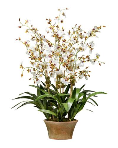 Cream Dancing Orchid in Terra Cotta Planter