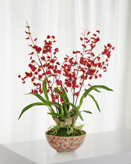 Winward Orchid in Longlife Bowl
