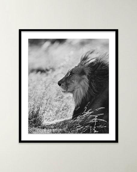 """Four Hands Art Studio """"Lion III"""" Black & White Photo by Isabella Juskova"""