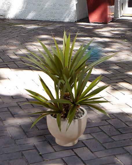 NDI Aloe Plant in Concrete Bowl