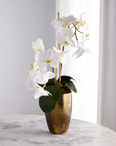 Golden Ombre Orchid Arrangement