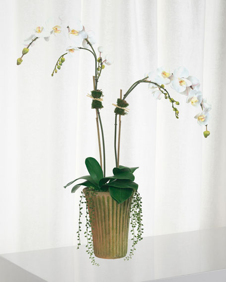 Diane James White Phalaenopsis Orchids In Mossy Planter