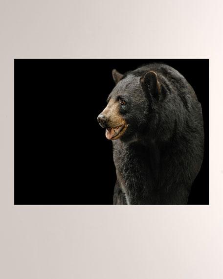 Black Bear I Giclee Photo On Plexiglass Wall Art
