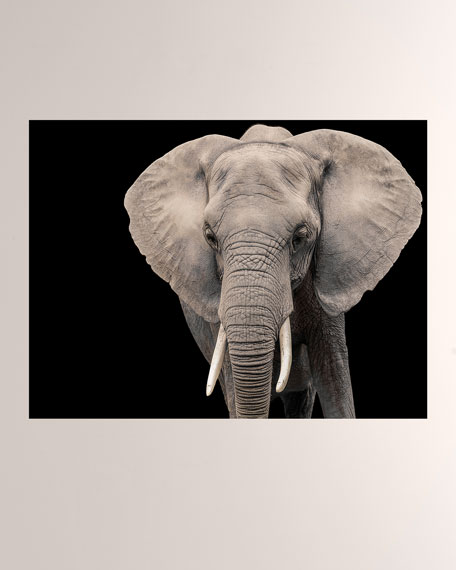 Elephant I Giclee Photo On Plexiglass Wall Art