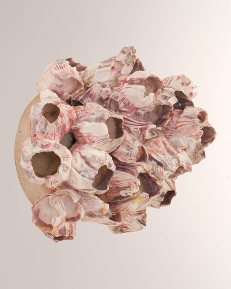 The Phillips Collection Barnacle Cluster Medium Wall Art