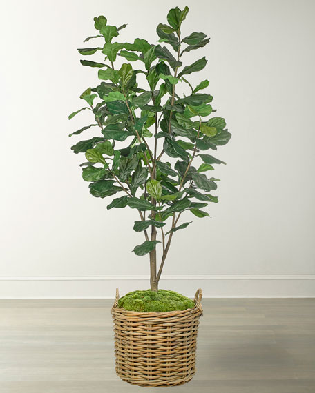 NDI Fiddle Leaf in Rattan Basket