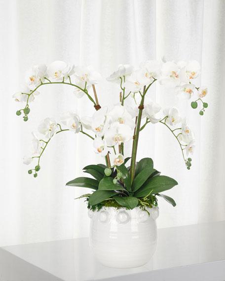 NDI White Orchid Phalaenopsis in White Pot