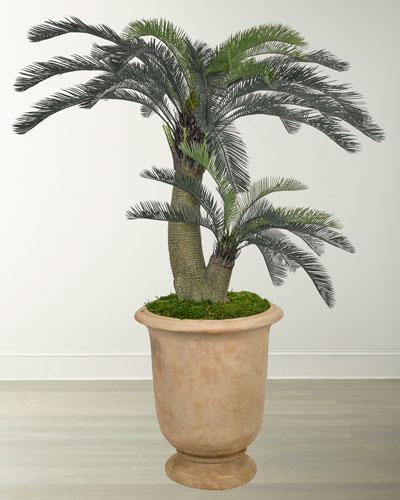 Cycas Palm in Terracotta Urn