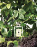 Blackberry & Bay Cologne 1.0 oz./ 30 mL