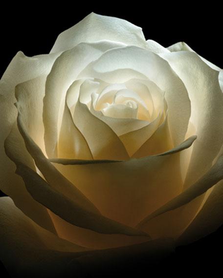 Exclusive Collection Extraordinaire Rose Velours Eau de Parfum, 2.5 oz./ 74 mL