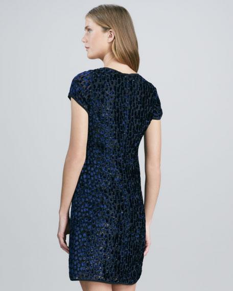 Short-Sleeve Velvet Burnout Dress, Navy/Black
