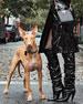 Cosmo Calf Small T Lock Shoulder Bag