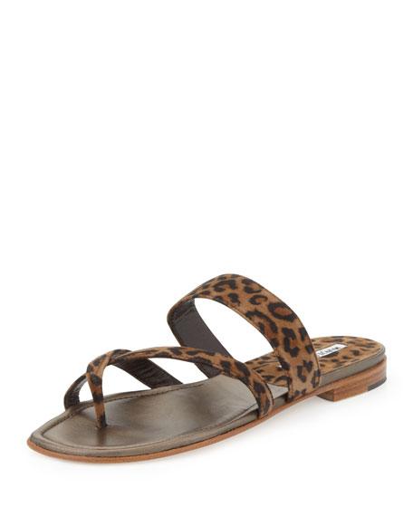 Susa Flat Suede Thong Sandal, Leopard Print
