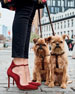 Gianvito Rossi Scalloped Suede Ankle-Wrap Pump
