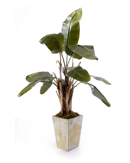 NATURAL BANANA TREE