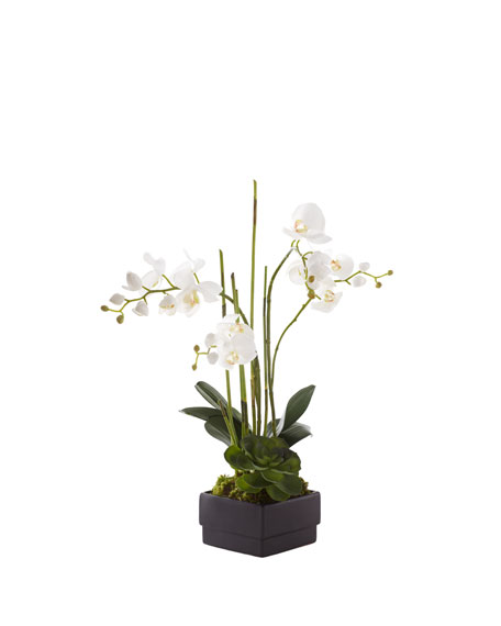 John-Richard Collection White Orchid in Black Planter Faux-Floral Arrangement