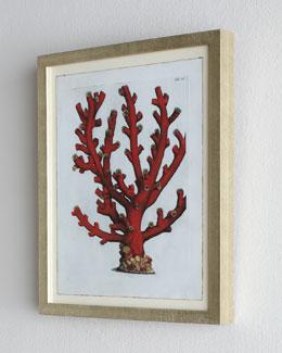 Red Coral D (Tubipora Musica Coral) Print