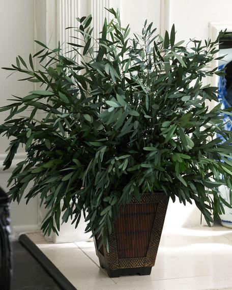 Preserved Eucalyptus Tree