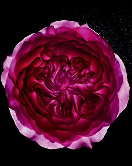 Prive Rose Alexandrie Eau De Toilette, 3.4 oz./ 100 mL
