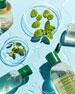 Kiehl's Since 1851 Herbal-Infused Micellar Cleansing Water, 8.4 oz./ 250 mL
