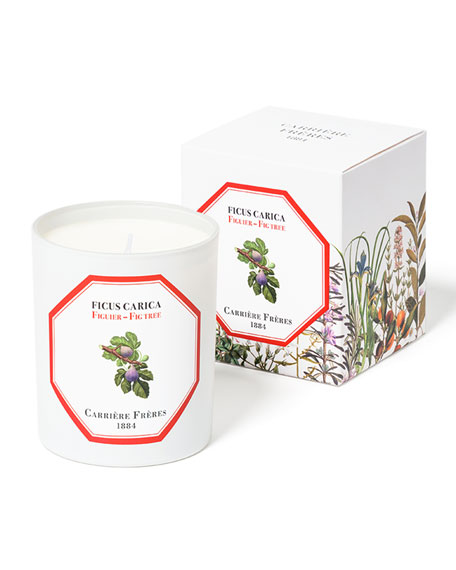 Carriere Freres Fig Tree Candle, 6.5 oz. / 184 g