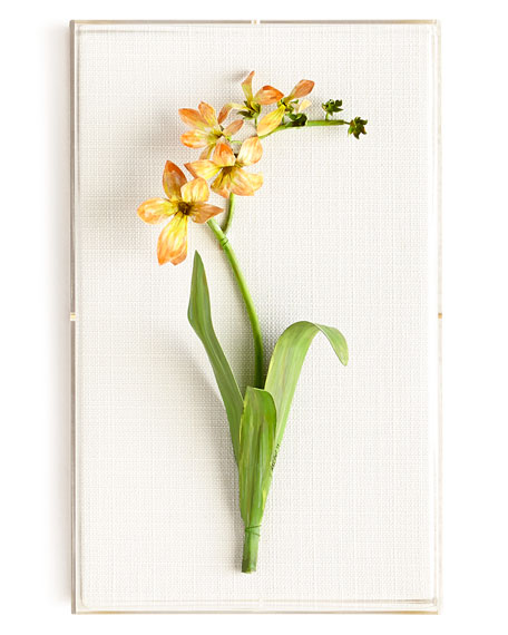 Original Painted Freesia Study