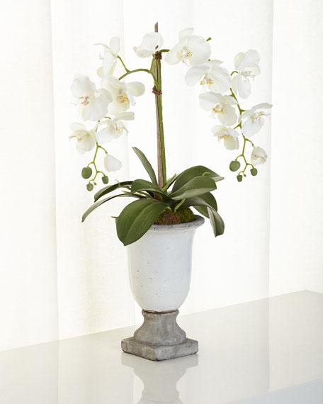 NDI Orchids in Ceramic Urn