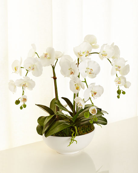 NDI Orchid Phalaenopsis Faux-Floral