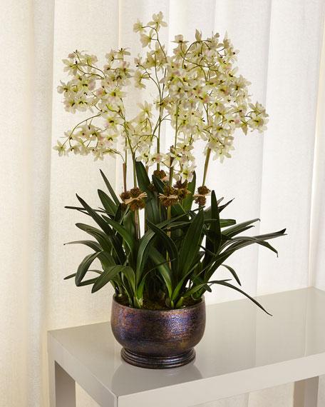 Diane James Dancing Orchid