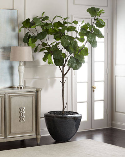 Garden Fiddle Leaf Fig Tree