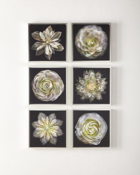 Fleur en Noir Photography, Set of 6