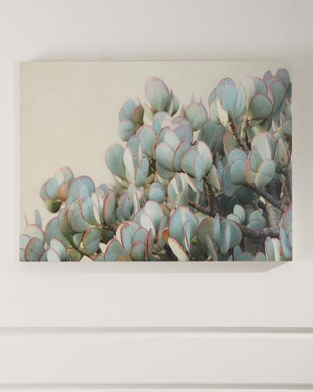 """Succulent 2"" Photograph Print on Maple Box Art"