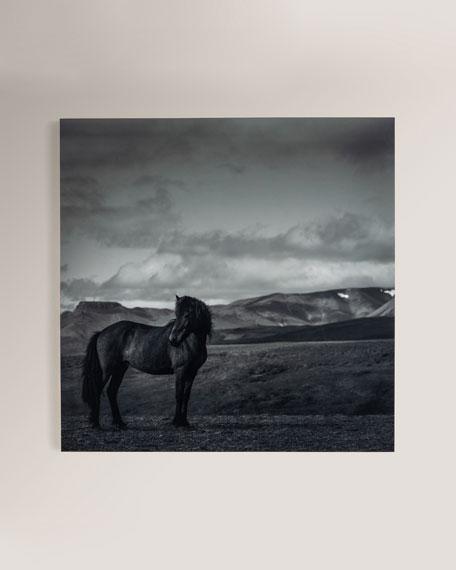 "Four Hands Art Studio ""Defender"" Photography Print on Maple Box Framed Wall Art"