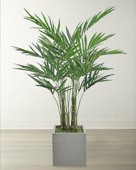 NDI King Palm Arrangement in Cube